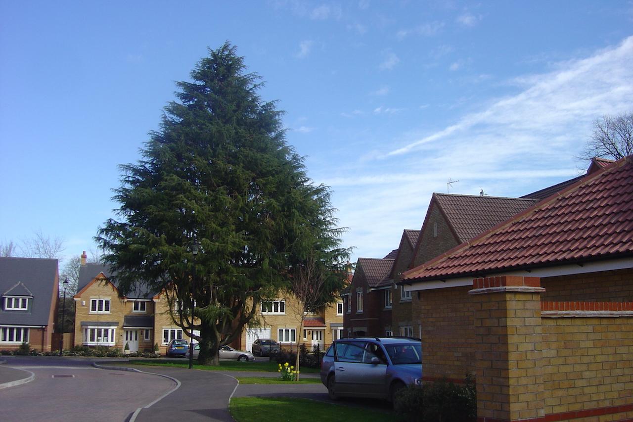 Trees & Planning