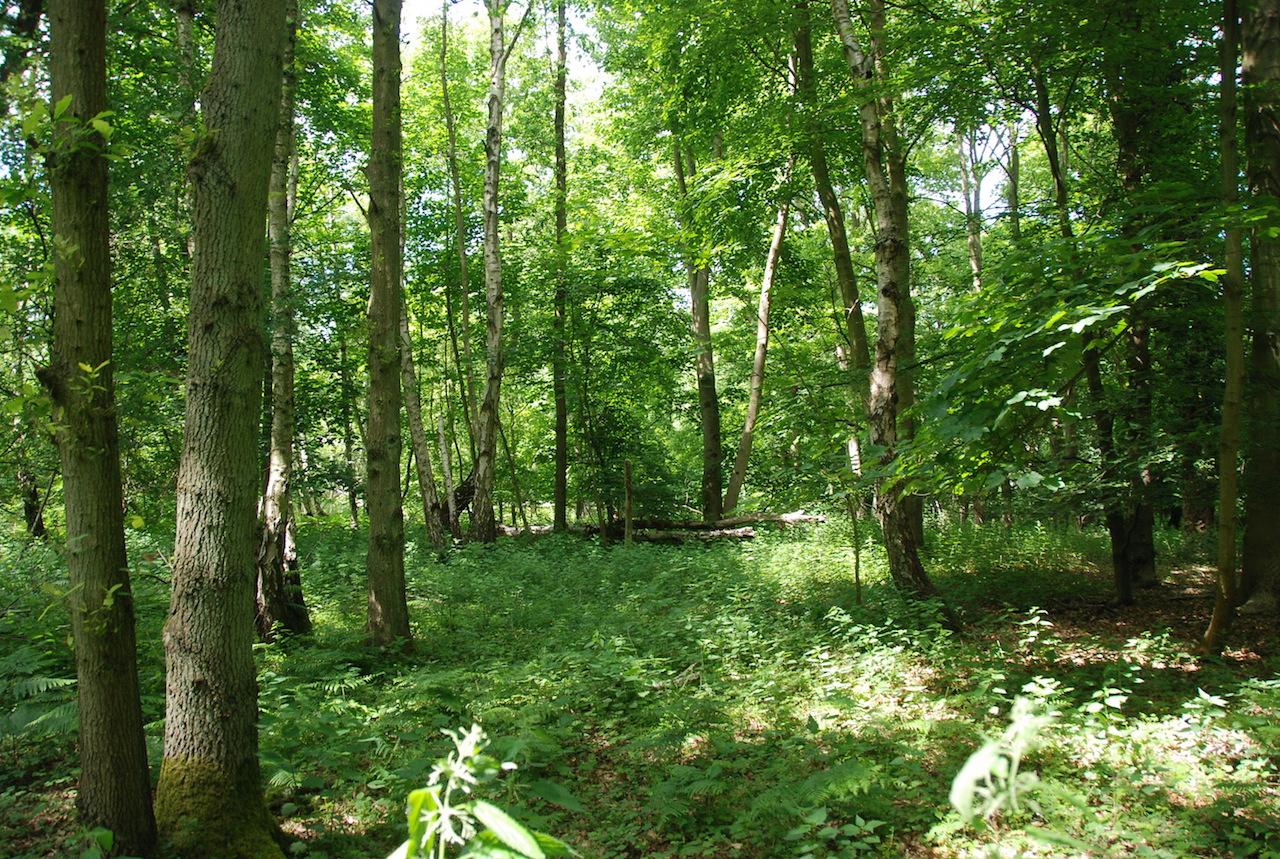 Heckfield Woodland